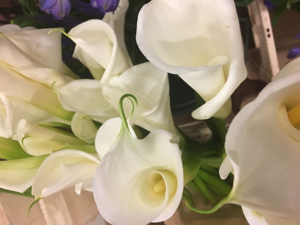 Fabulous ivory Calla lilies. A bridal & wedding flower classic.